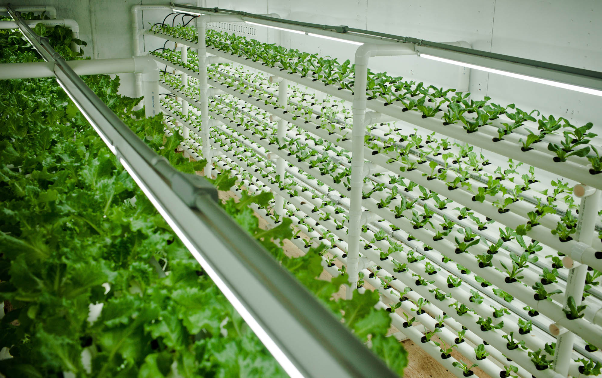Podponics Lettuce Think Differently About Farming In Cities